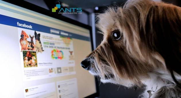 TO GO WITH AFP STORY BY ISABELLE TOUSSAINT - A dog stands in front of a computer screen with a facebook page opened on it, on January 4, 2013 in Lille, Northern France.         AFP PHOTO / DENIS CHARLET        (Photo credit should read DENIS CHARLET/AFP/Getty Images)