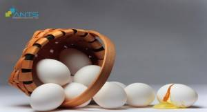 Why you don't put all the eggs in one basket